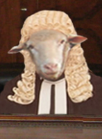 sheep-judge[1]